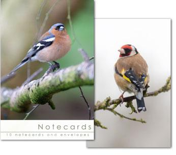 NOTECARDS:FINCHES